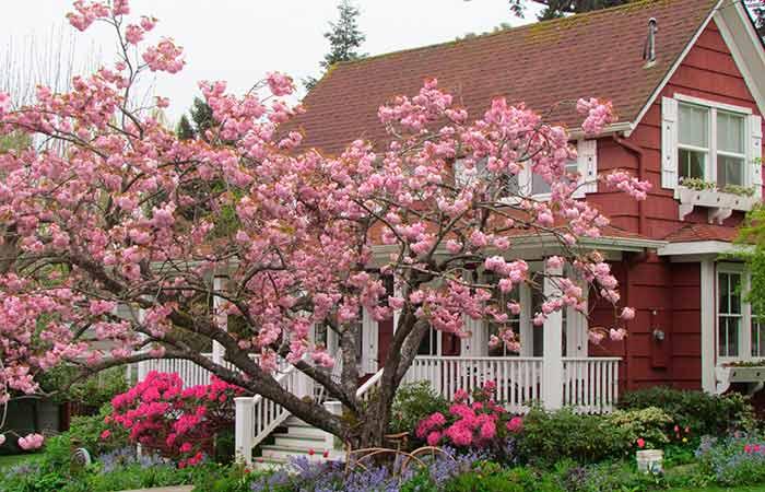 Дерево привлекает достаток и благополучие в Ваш дом