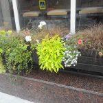 Интересные композиции из цветов в уличных контейнерах